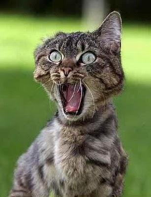 عکس های دیدنی و خنده دار از حیوانات