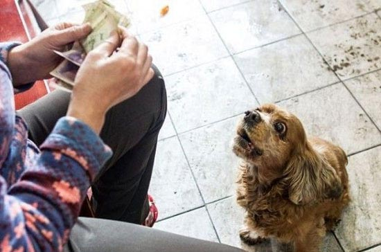 رفتار جالب این سگ برای پول گرفتن از عابران (عکس)