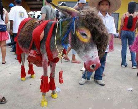 عکس های طنز از انواع خر