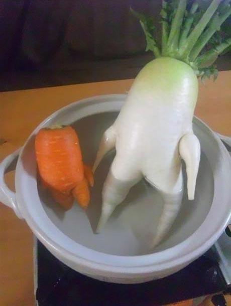 عکس های دیدنی و خنده دار از سبزیجات