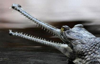 عکس هایی شگفت انگیز از حیوانات در حال انقراض