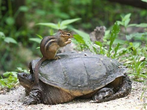 عکس های جالب و دیدنی از حیوانات