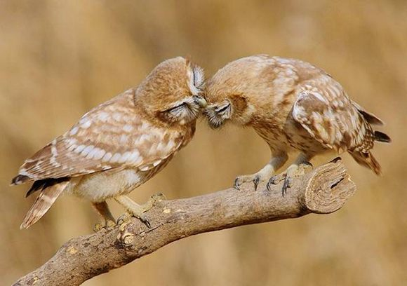عکس هایی دیدنی از عشق بازی حیوانات