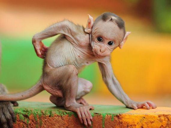 عکس هایی از حیوانات بامزه و دیدنی