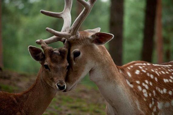 عکس های دیدنی از دنیای زیبای حیوانات (3)