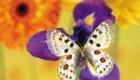 عکس های زیبا و دیدنی از پروانه ها