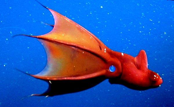 عکسهای 10 مخلوق وحشتناک اعماق دریاها