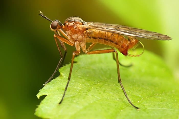 عکس هایی بی نظیر از حشرات