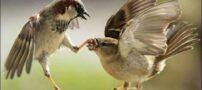 عکس های دیدنی از کارهای عجیب حیوانات