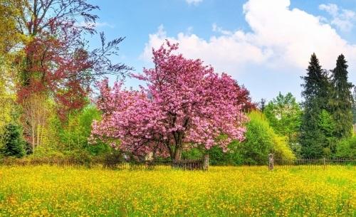 بهترین عکس های فصل بهار