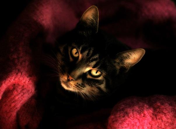 عکس هایی از گربه های زیبا
