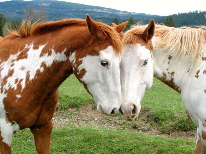 عکس از اسب های بسیار زیبا