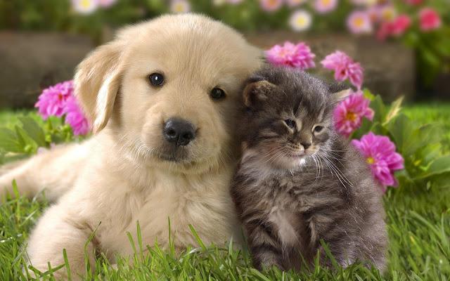 عکس های جالب و دیدنی از دنیای سگ ها