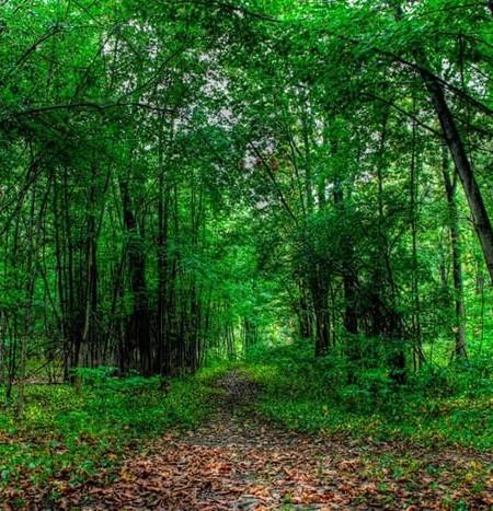 عکس های زیبا و دیدنی از جنگل ها