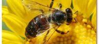 زنبورها جهان را چگونه می بینند