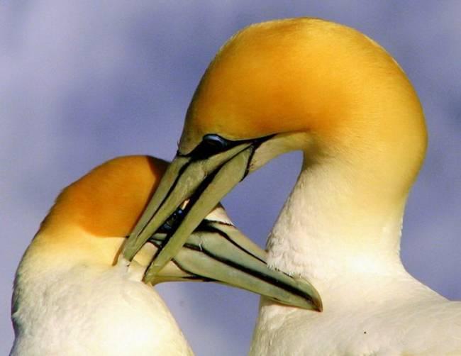 عکس کمیاب از عشق در میان حیوانات (2)