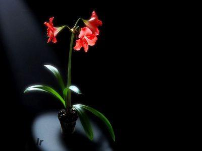 هر گلی به چه معناست
