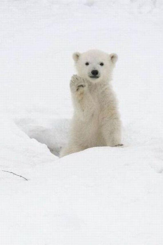 عکس های دیدنی و خنده دار از حیوانات جدید (2)