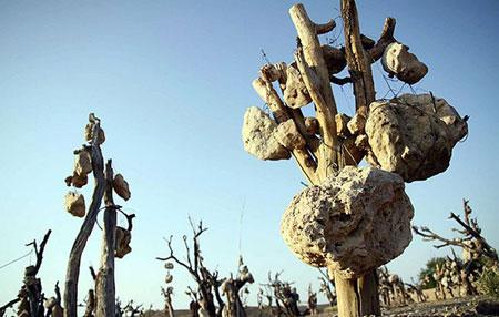 باغی ترسناک از میوه های سنگی