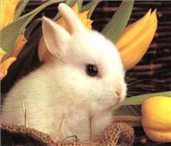 دانستنی های خرگوش ها