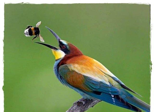 ع  پسر عکس های زیبا از پرندگان