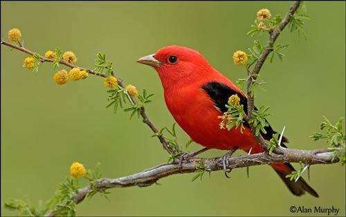 عکس های آرامش بخش از طبیعت
