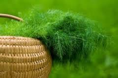 گیاهانی که سرفه  را درمان می کند