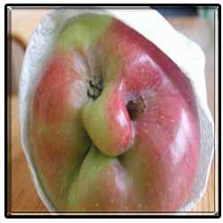 دختری مثل سیب سرخ و سفید (طنز)