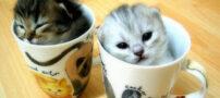 ترساندن گربه ( عکس متحرک )