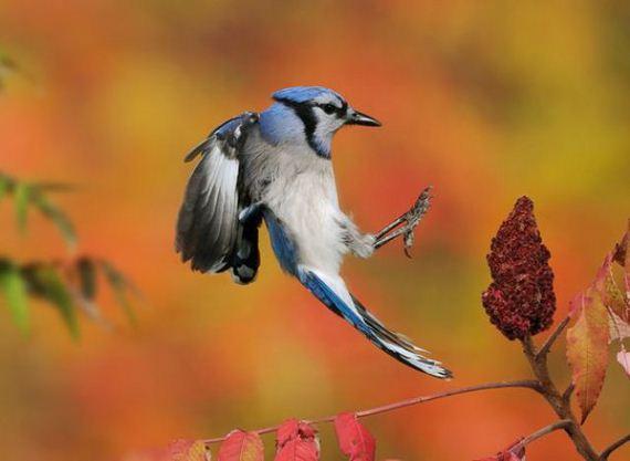 عکس هایی جذاب از دنیای زیبای حیوانات