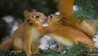 عکس های عاشقانه و رمانتیک از حیوانات زیبا