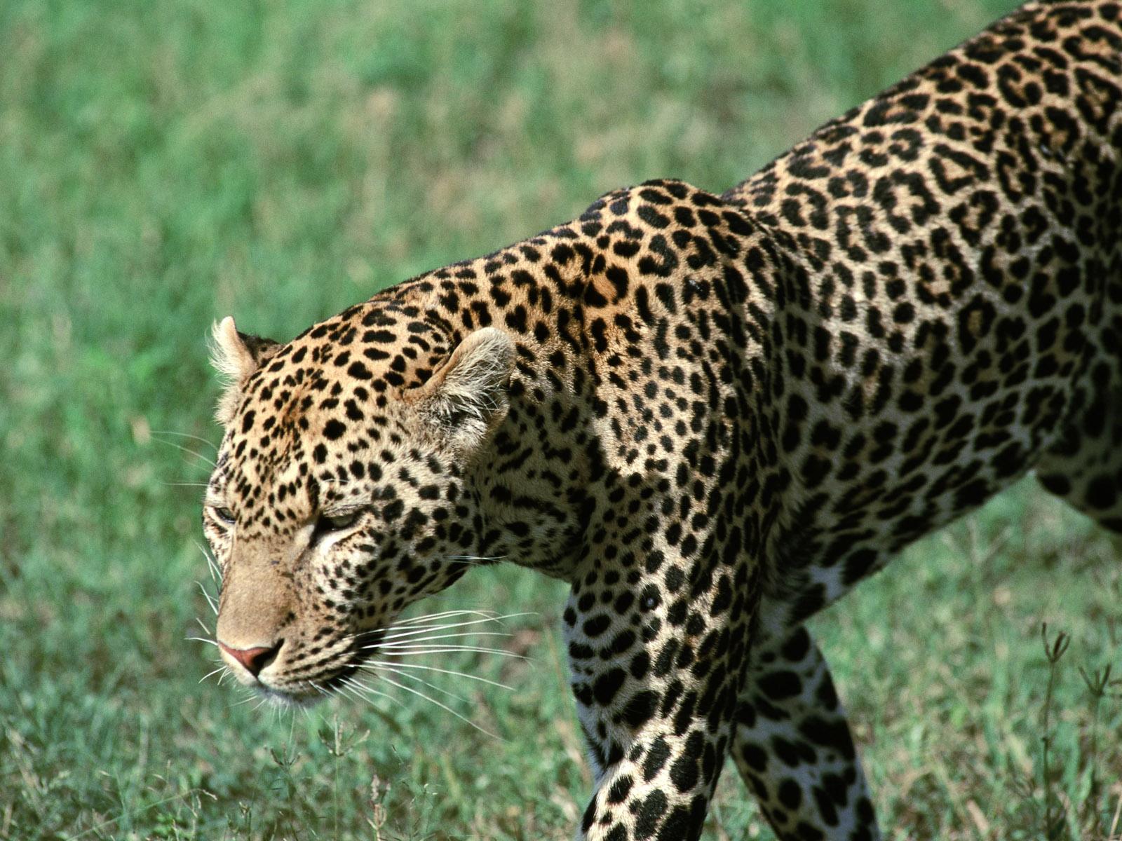 عکس های حیوانات و جانوران با کیفیت بالا
