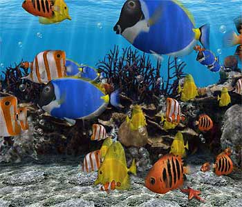 دانستنی های ماهی و اکواریوم