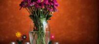 عکسهای گل های زیبا و دلنشین