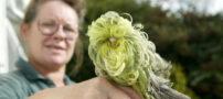 عکس هایی از عجیب ترین مرغ عشق دنیا