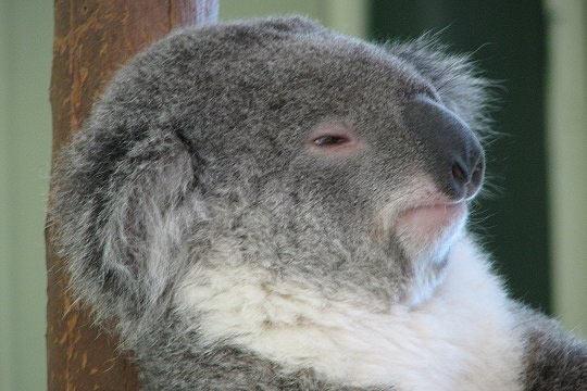عکسهایی خنده دار از شکلک درآوردن حیوانات
