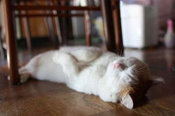 عکس هایی دیدنی از گربه های ملوس
