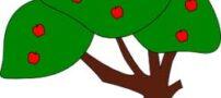 طالع بینی درخت ماه تولد