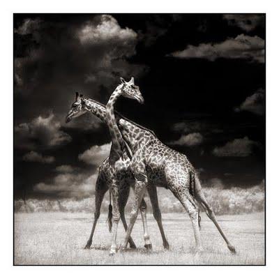 عکس های سیاه و سفید از حیوانات در آمازون