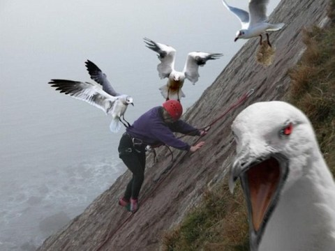 زمانی که حیوانات خشمگین میشوند ( تصویری )