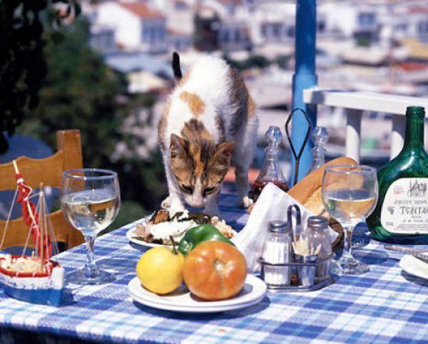 عکس های غذا خوردن حیوانات