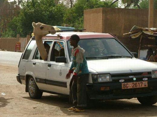 عکس های خنده دار از سوتی های افریقا