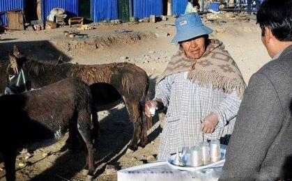 افزایش طول عمر با شیر خر ( تصویری )