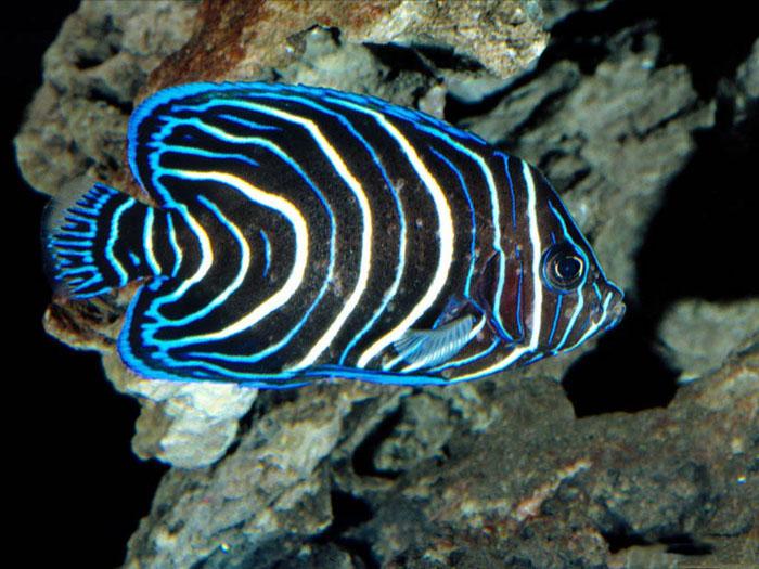 عکسهای ماهی های رنگارنگ در آب