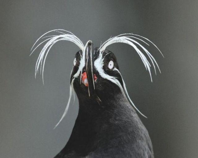 عکس های جالب و دیدنی از حیوانات (3)