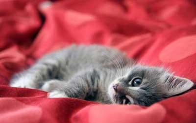 عکس از گربه های دوست داشتنی