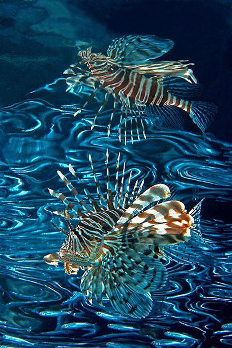 زیباترین عکس ها از اعماق اقیانوس ها