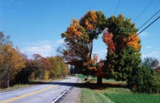 عکسهایی از جالب ترین و عجیب ترین درختان