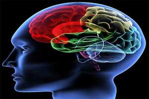 تاثیر چاقی بر مغز