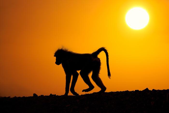 عکس هایی از حیات وحش در زمان طلوع و غروب افتاب
